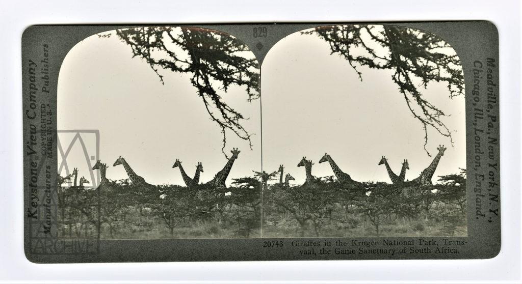 10 Martin E. and Osa Johnson Trailing African Wild Animals
